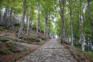 monte sacro, sentiero del pellegrino